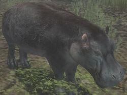 Pygmy Hippopotamus.jpg