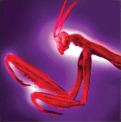 Hi-res-Black Mantis Thrust.jpg