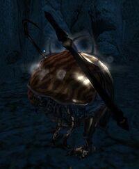 Thorn Beetle.jpg