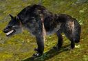 Black Wolf.jpg