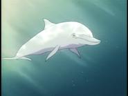 White Dolphin pic