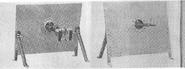 Villar Perosa shield mount