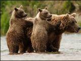 Histoire de l'ours en France et en Espagne