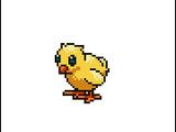 Chick (Pet)