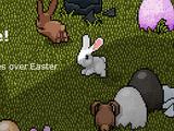 Bunny (Pet)