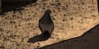 Glados screens bird002