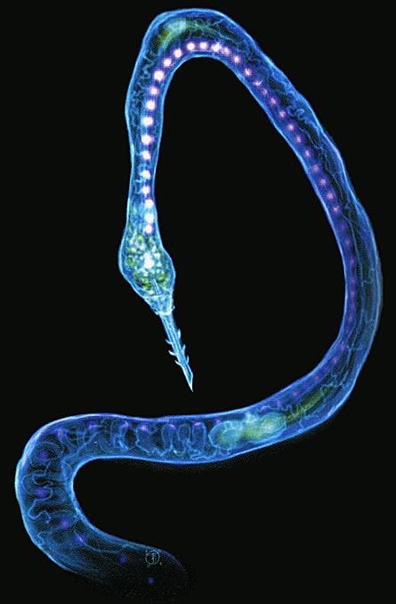 Hydra concept art.jpg