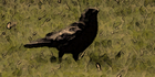 Glados screens bird005