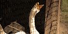 Glados screens bird003
