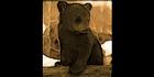Glados screens black bear cub