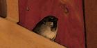 Glados screens bird001