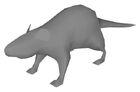 Rat beta model