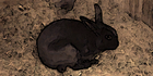 Glados screens rabbit001