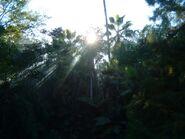 Night Prey Trees 3