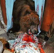 Bear HHN 25