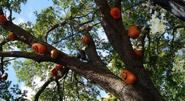 Trick 'r Treat Pumpkins 1 (HHN 27)