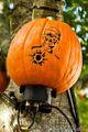 HHN 20 Pumpkins JC 4