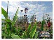 Field of Screams Windmill