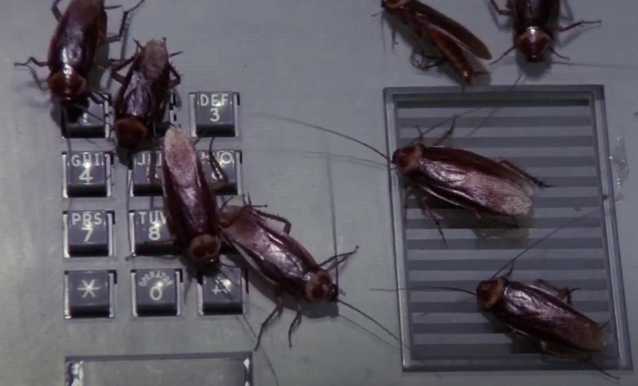 Cockroaches (Creepshow)