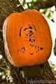HHN 20 Pumpkins JC 5