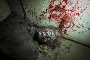 Screenshot 2020-01-15 Halloween Horror Nights - Hollywood - Photos(2)