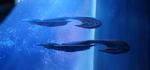 Assault carrier daraetheus