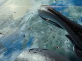 Schlacht um die Erde