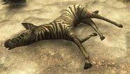 Cebra dead