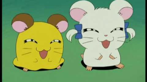 Hamtaro ~ The Knitting Song (French Français)