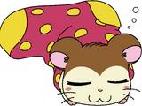 Snoozer