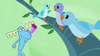 STV1E13.1 Birds