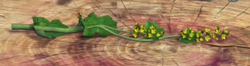 Lady'sMantle.png