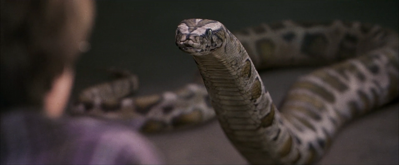 Harry-Snake-PSF.png