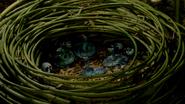 Occamy nest FB