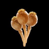 PM-Item PoppyHeads.png
