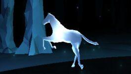 White stallion pm