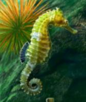 Hippocampe (créature non magique)
