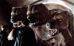 Cão de três cabeças