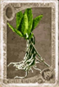 Branchiflore
