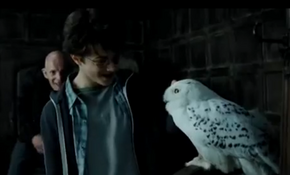 Harry en Hedwig.png