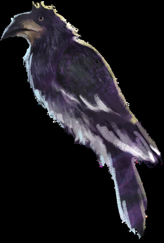 Brilliant hornbill WU.png