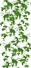 Nav-Botanique lierre 2.png