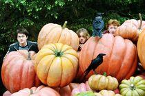 Pumpkin hp3.jpeg