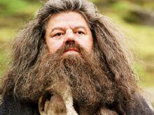 Il-guardiacaccia-di-hogwarts-rubeus-hagrid.jpg