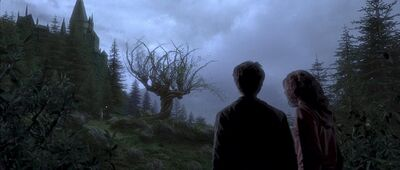 Harry and Hermione see Remus Lupin.jpg