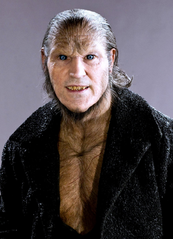 Greyback.PNG