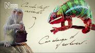 Demimoz (Fantastic Beasts The Wonder of Nature)
