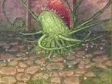 Duivelsstrik (magische plant)