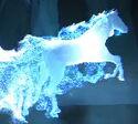 Dun Stallion