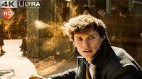 Fantastic Beasts Crimes of Grindelwald Newt's Magic In Paris 4k